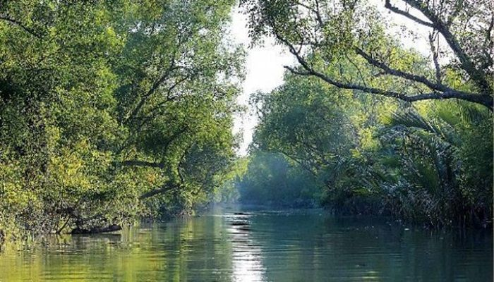 File Photo: The Sundarbans, a world heritage site and the largest mangrove forest.