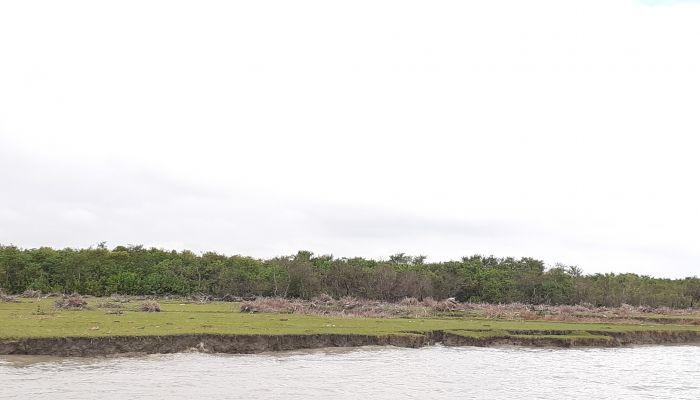 Green Island--The Illusion