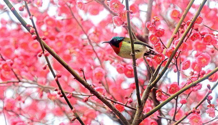 Spring Arrives in China