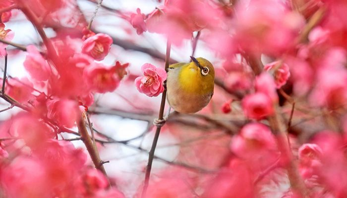 """""""There is a hint of spring in the air!"""" says the warbling white-eye."""