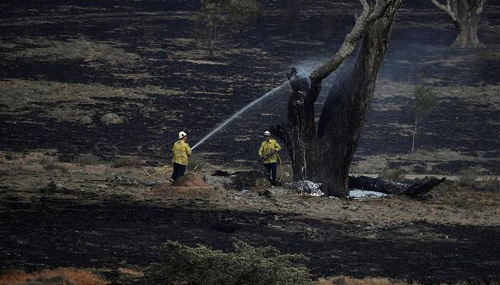 Firefighters spray water on a smoldering tree left in the wake of a bushfire near Bumbalong, New South Wales, Australia. Photo: Collected from Reuters