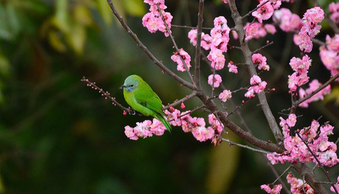"""""""Spring has arrived!"""" more little birds sing to each other."""