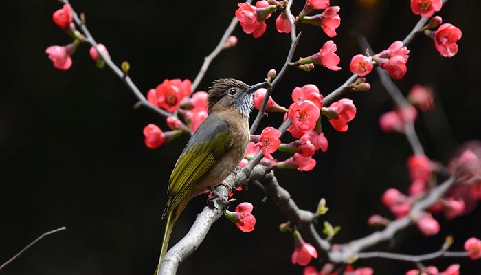Spring has come in Renhuai City in Zunyi City, Guizhou Province, in southwest China, February 19, 2020.