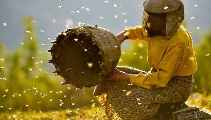 """A double category win? The difficult feat of being nominated for best international film and best documentary film was achieved by """"Honeyland,"""" a heartfelt, fly-on-the-wall doco from North Macedonia by directors Ljubomir Stefanov and Tamara Kotevska. It tells the intimate story of a nature-loving beekeeper, following her daily joys and struggles. Significant buzz for """"Honeyland"""" makes it a good Oscar bet."""