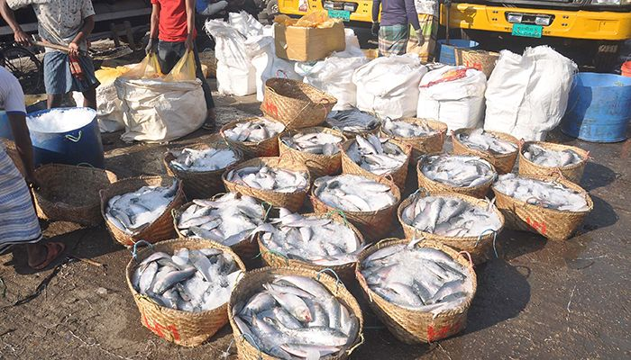The fishermen are catching Hilsjha fish in a large number. Workers and fishermen are busy selling and selling hilsa in Chittagong's new Fishery Ghat.