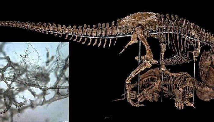 Chromosomes, DNA Found in Dinosaur Fossils