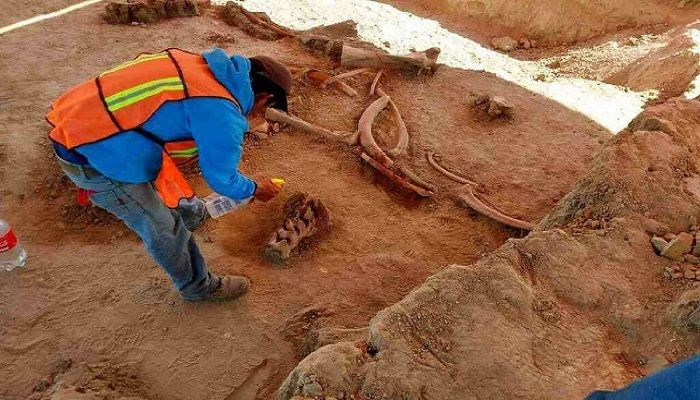 Bones of 60 Mammoths Unearthed in Mexico City