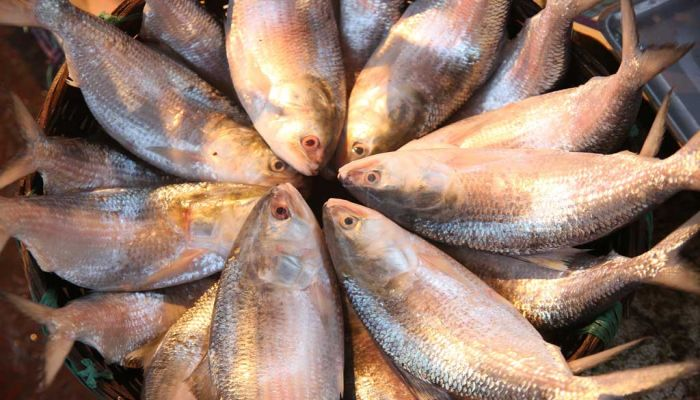 Expert: Ilish Will Be Tastier This Year