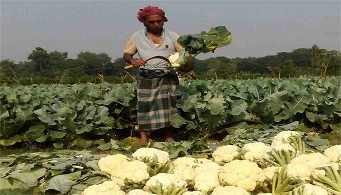 Govt Banks on Incentives to Help Agriculture Sector
