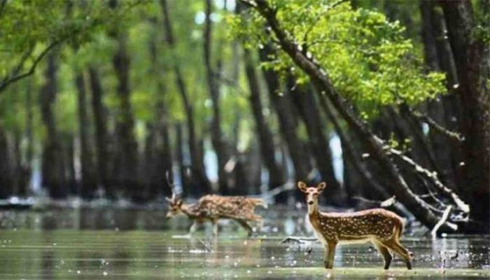 Sundarbans Tourism Businesses Look For Reopening