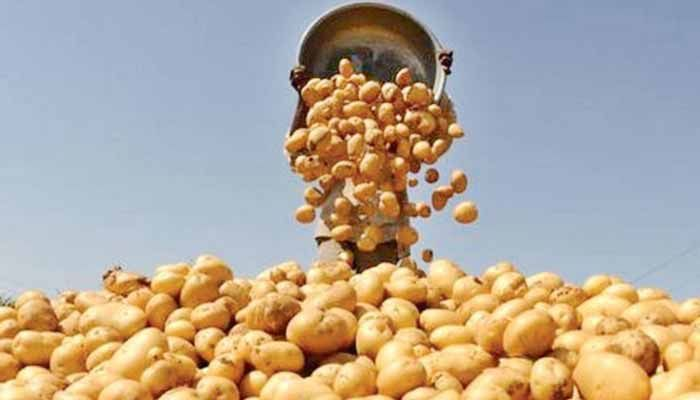 TCB to Sell Potatoes at Tk 25 Per Kg from Today