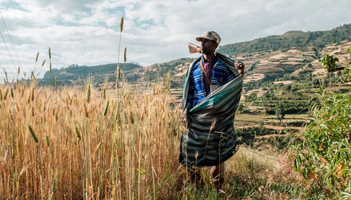 A farmer and militia fighter on his land near the village of Tekeldengy, north-west of Gondar, Ethiopia. Hundreds of people have reportedly been killed since 4 November, during fighting between the national army and forces loyal to the leaders of the northern Tigray region.