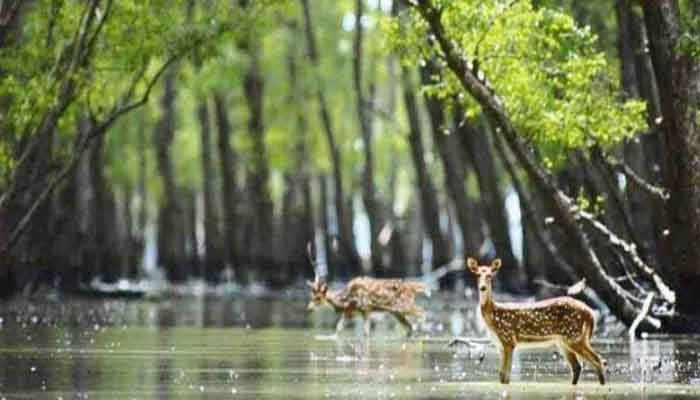Sundarbans Reopens to Tourists after 7 Months
