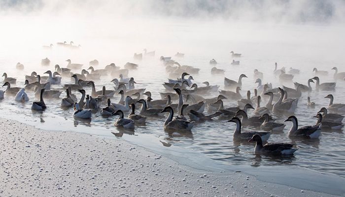Birds swim as mist rises from the Hun River in Shenyang, Liaoning province, China. Photo By: CAI JINGYU