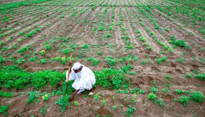 Bangladesh Eager to Buy Land Abroad and Do 'Contract Farming'