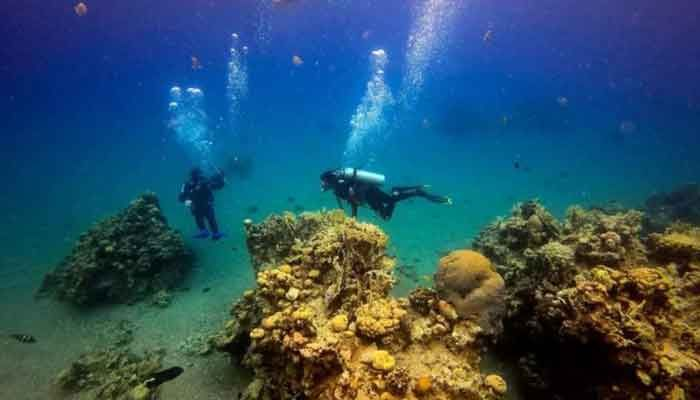 Red Sea Coral Reefs 'under Threat' from Israel-UAE Oil Deal