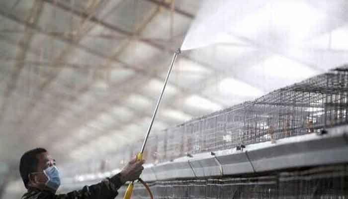 China Reports Human Case of H10N3 Bird Flu