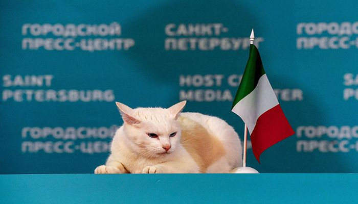 Achille the cat, one of the State Hermitage Museum mouse hunters, poses for pictures next to the Italian national flag after attempting to predict the result of the first UEFA Euro 2020 football match between Turkey and Italy, during a ceremony in Saint Petersburg, on June 11, 2021. || Photo: Collected