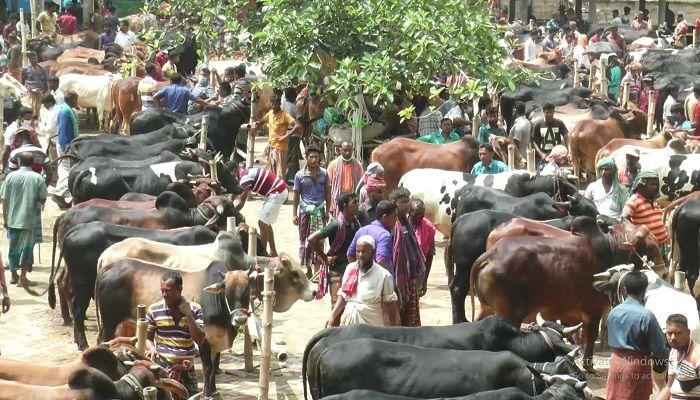 Over 90.93 Lakh Cattle Sacrificed during Eid-ul-Azha