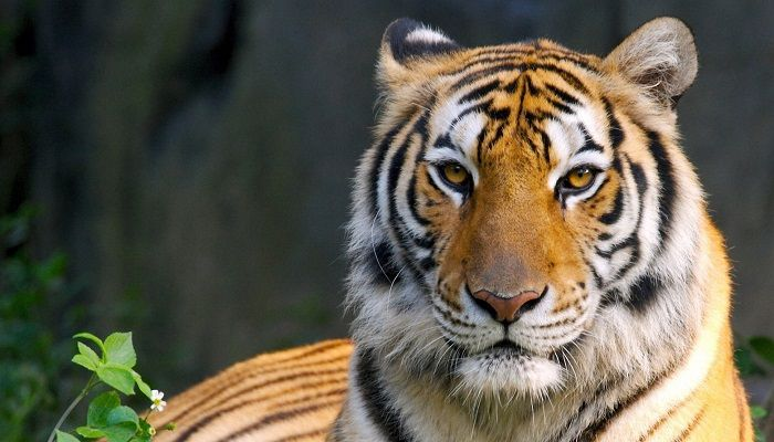 Save Tigers, Save Biodiversity