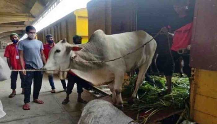 800 Sacrificial Animals Arrive in Capital on Cattle Special Train