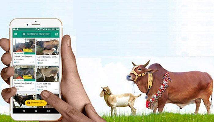 Digital Cattle Market Gets Momentum in Khulna