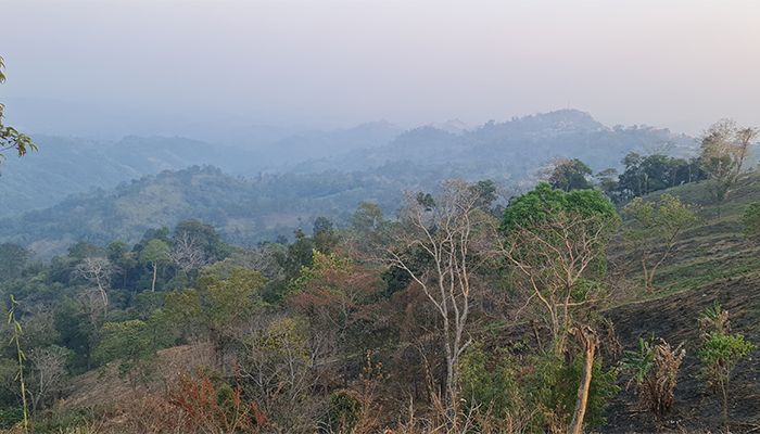 5.5 Thousand Acres of Forest Land Recovered in 11 Months