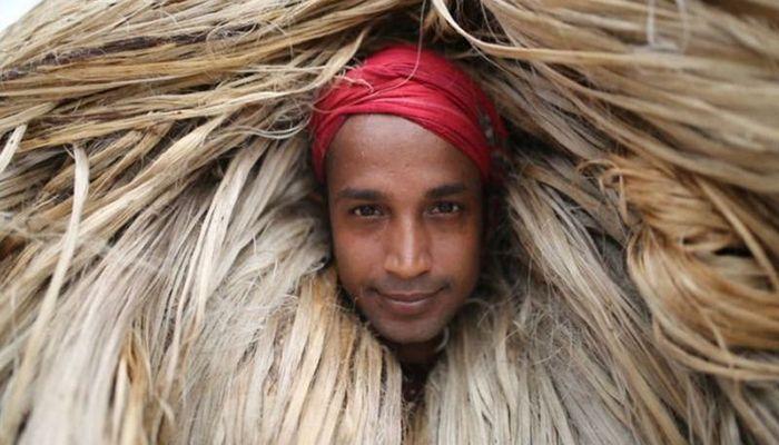 Jute Cultivation in BD: Is Golden Fiber Back Again?