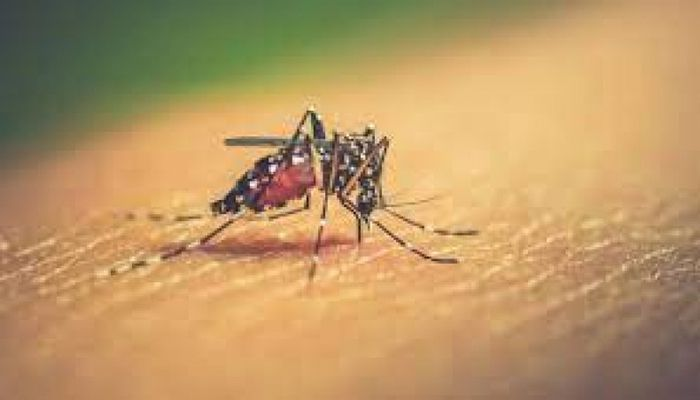 Dengue: 2 Dies, 182 More Hospitalized in 24 Hrs