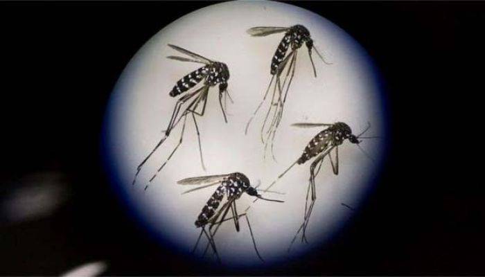 197 Dengue Patients Hospitalized in 24 Hours